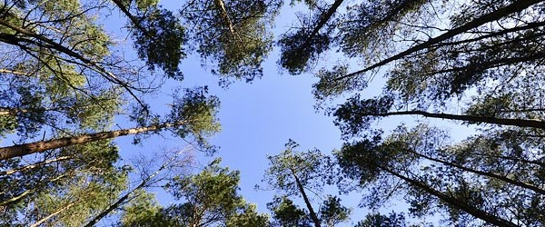 Big Data forestal